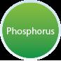 Phosperus